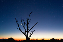 A Barren Tree Silhouette Against Sunset, Stars And Crescent Moon In Canyonlands National Park In Southern Utah.