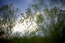 Wildflowers In Tallgrass Prairie National Preserve, Kansas