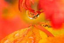 A Colorful Scene Is Found Inside A Dew Drop Of Rain During The Fall.