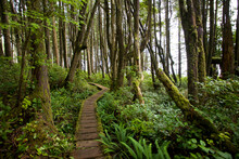 The Boardwalk Of The West Coast Trail Along The Pacific Northwest.