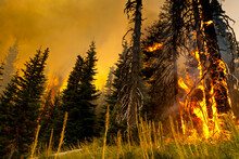 High Winds And Large Pockets Of Standing Dead Timber Carries A Fire In Washington State