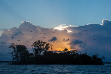 A Silhouette Of Bird Island Sanctuary At Sunrise With Frigate Birds Circling In Front Of Storm Clouds. Belize.