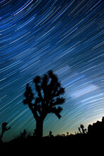 Joshua Tree And Star Trails In The Joshua Tree National Park In California.