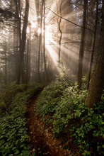 A Trail In The Forest With Sun Rays.