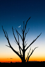A Single Tree Silhouette Against Sunset Glow As The Stars And Crescent Moon Appear In Canyonlands National Park, Utah.
