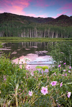 Willow Lake Wildflowers At Sunset