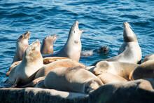 Seals Bath In The Sun Above The Crystal Clear Waters At The La Jolla Cove In La Jolla, CA.