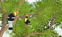 A Pair Of Great Hornbill Buceros Sit On A Tree Branch In The Crown. Tropical Bird Great Indian Hornbill At Sunset. Realistic Vector Landscape
