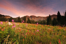 Sunset On Devils Castle And Wildflowers In Albion Basin At Alta Ski Resort.