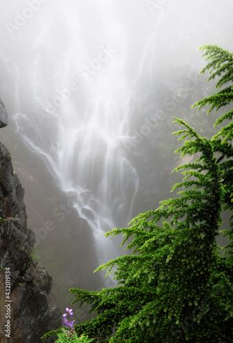 Edith Creek, Paradise Park, Cascade Range, Mount Rainier National Park Wall mural