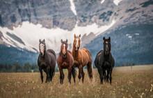 Horses Along The Rocky Mountain Front, Montana.