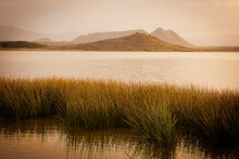 Reed Grasses In A Lake In Kenya Africa.