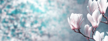 Natural Horizontal Banner, Background Concept - White Magnolia Flowers On A Branch Tree Against Garden Background In The Light Of The Sun, Closeup With Space For Text