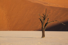 Dead Tree Against The Sand Dunes At Sunrise In Dead Vlei, Namibia.