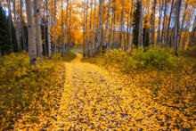 A Leaf Covered Road Leads Into The Forest Near Electric Mountain Lodge, Colorado.