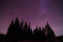 The Milky Way Galaxy Extends Out From A Cluster Of Trees In The Bighorn Mountains Of Wyoming.