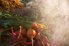 Organic Beets On Sale At The Farmers Market In Boulder, Colorado.