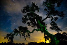 Light Pollution Blends Into The Stars While A Live Oak Twists Into The Frame. Santa Barbara County, CA.