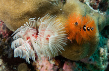A Group Of Feather Duster Worms.