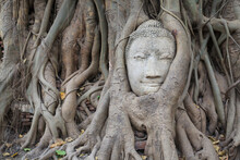 Buddha Statue Head Surrounded By Tree Roots. Wat Phra Mahathat Temple. Ayutthaya (former Capital Of Siam). Ayutthaya Province. Thailand.