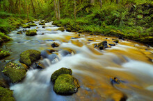 Golden Light Reflects In The Rushing Waters Of Gorton Creek In Oregon's Columbia River Gorge.