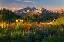 Beautiful Soft Light Ion Wildflower Laden Meadows Looking Towards The Tatoosh Range, Mt. Rainier National Park.