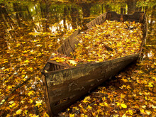 An Old Worn Rowboat Filled With Autumn Leaves In A New England Stream