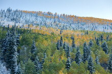 Blast Of Colors After An Early Autumn Snowfall From The Town Of Telluride, CO