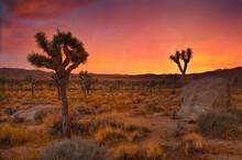 Stormy Sunset In Joshua Tree National Park, California