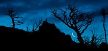 Moon Rises As Dawn Light Illuminates The Skeletons Of Whitebark Pine, Lewis Range, Montana