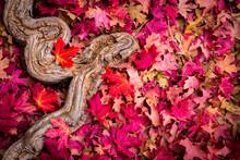 Autumn Colors Come To Zion National Park