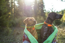 Two Dogs Snuggled Under A Colorful Quilt In The Morning Forest