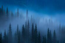 Fog Lifts From The Trees Near Hurricane Ridge In Washington's Olympic National Park.