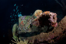 A WWII Cannon Rests On The Deck Of A Shipwreck In The Solomon Islands.