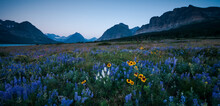 Wildflowers Along The Rocky Mountain Front. Glacier National Park, Montana.