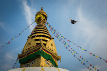 A Pigeon Flies Near The Ancient Religious Complex In Nepal Named Swayambhunath, Also Known As The Monkey Temple.