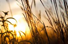 Sun Shining Through The Prairie Grass At Voas Nature Area Near Minburn, Iowa