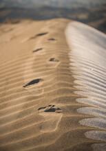 Footprints In The Sand Dunes Of The Juniper Dunes Wilderness In Washington.