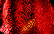 Detail Of The Eggs Of A Spanish Dancer.