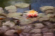 Digital Painting Of A Water Lily In The Pond At The Gardens, New York City.