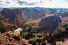 Mountain Goat Stands At The Edge Of Boulder Cliff At The Maroon Bells In Colorado.