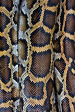Miami, FL. The Everglades. Close Up Of Burmese Python Skin And Patterns.
