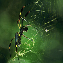 Spider From Costa Rica