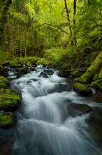 Peak Spring Greens Surround A Beautiful Section Of Gorton Creek In Oregon's Columbia River Gorge.
