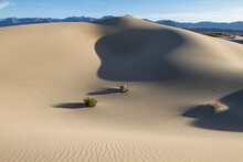 Late Afternoon In The Mesquite Sand Dunes In Death Valley, California.