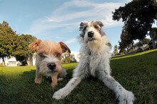 Wide Angle Of Two Dogs Together.
