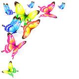 Fototapeta Motyle - butterfly794