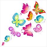 Fototapeta Motyle - butterfly798
