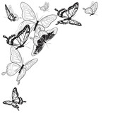 Fototapeta Motyle - butterfly795