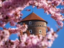 Spring In Krakow - Tower Of The Wawel Castle In Flowers.